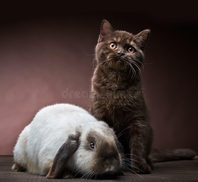 Kattunge och kanin arkivbilder