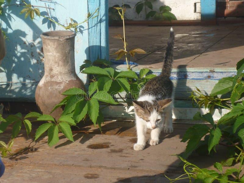 Kattunge och kanna royaltyfria bilder