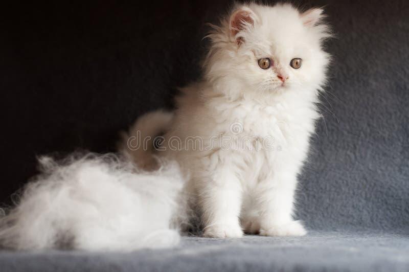Kattunge- och katthår royaltyfri bild