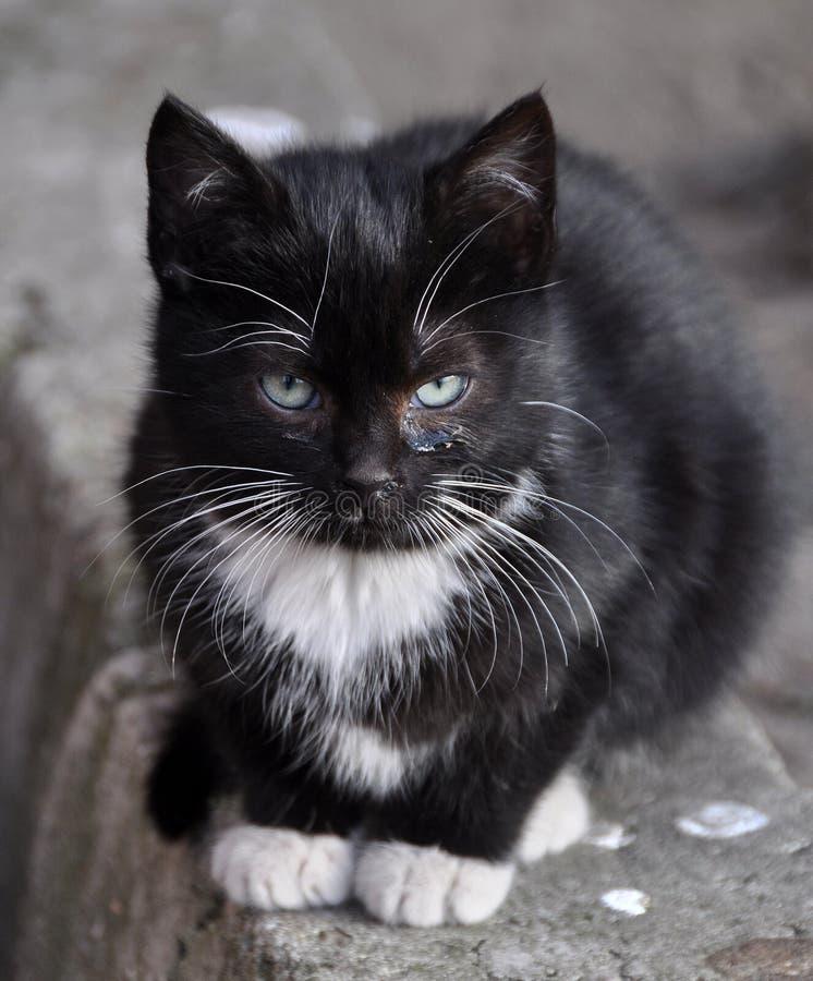 Kattunge på djurt skydd arkivbild