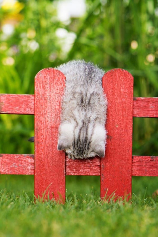 Kattunge på ett trädgårdstaket royaltyfria bilder