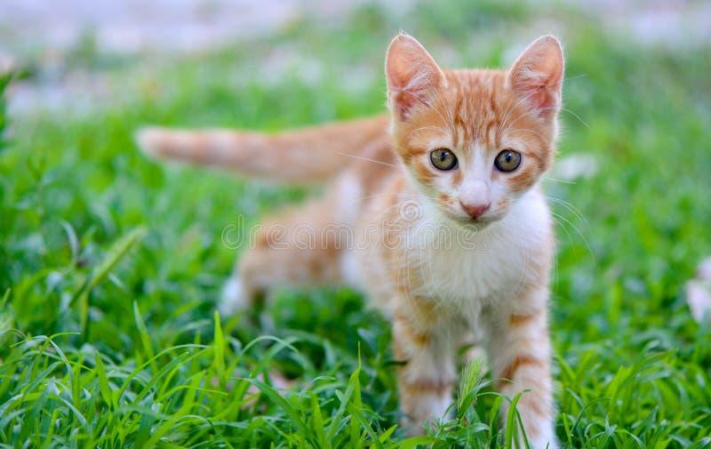Kattunge på gräs royaltyfri bild