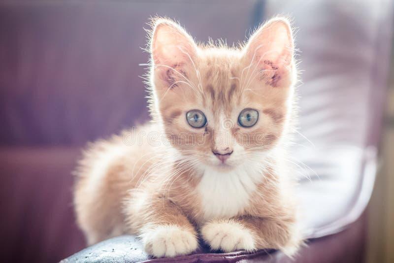 Kattunge på solljuset royaltyfri fotografi