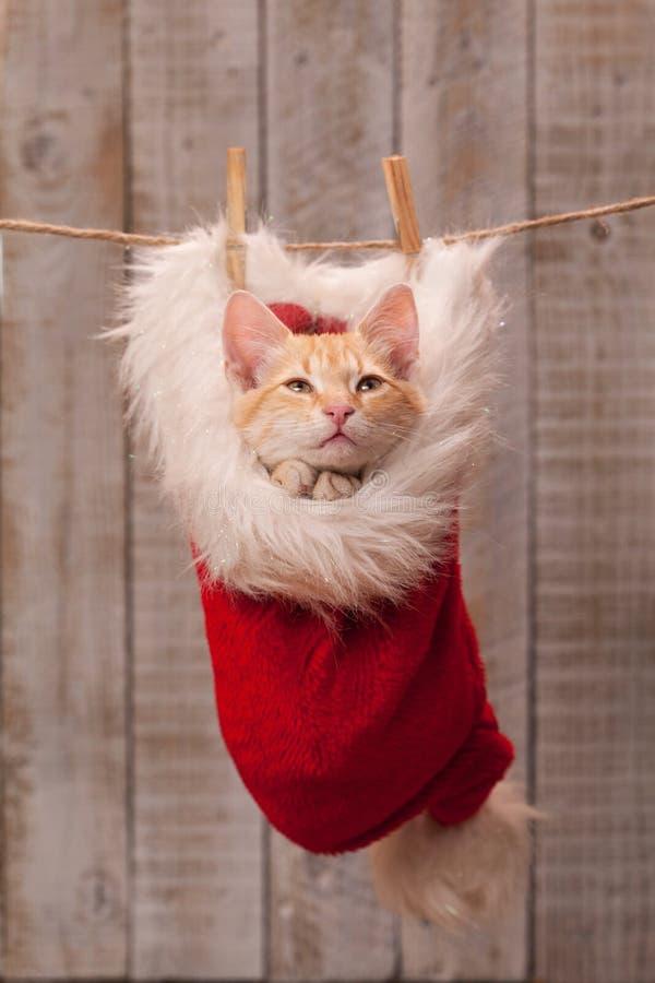 Kattunge som frågar för en trevlig gåva - att be med sammanfogat tafsar, bygga bo i en santa hatt royaltyfria foton