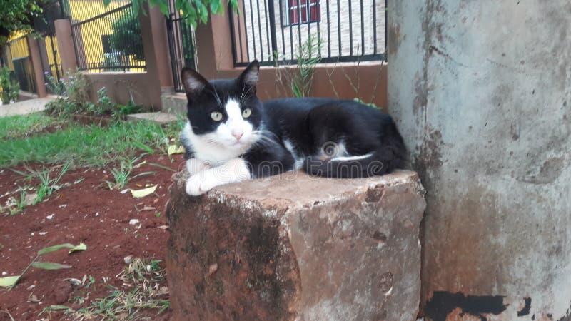 Kattunge som håller ögonen på med sleeplessness royaltyfri bild