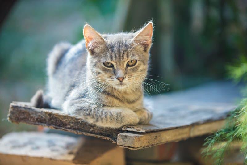 Kattunge som kopplar av i trädgården arkivbild