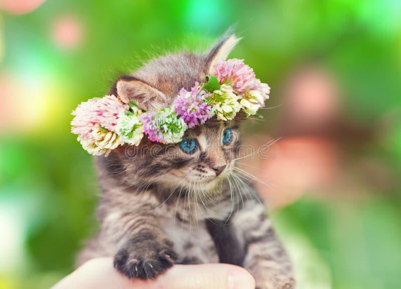 Kattunge som krönas med en chaplet av växt av släktet Trifolium arkivfoto