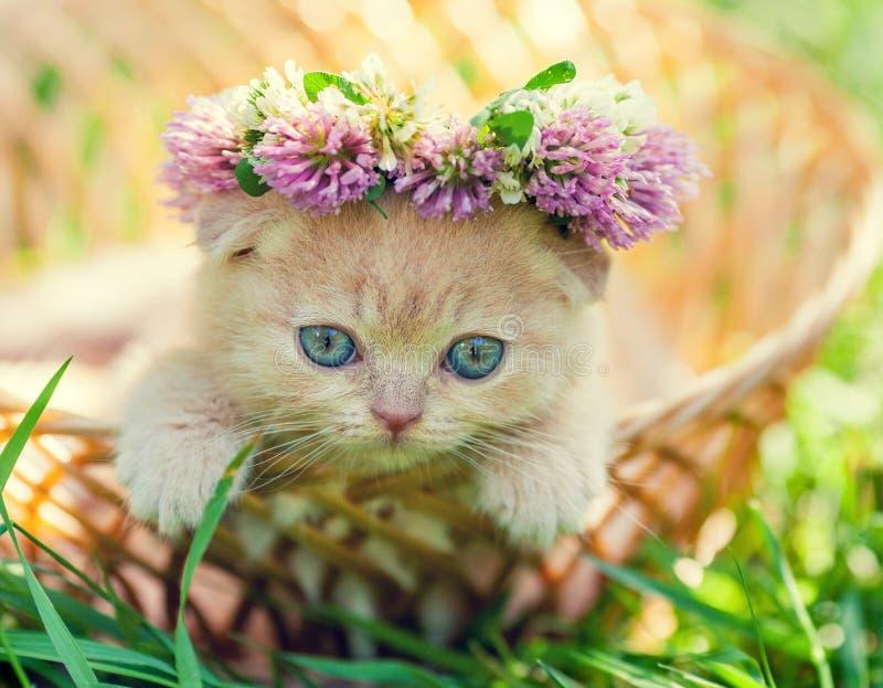 Kattunge som krönas med en chaplet av växt av släktet Trifolium arkivfoton