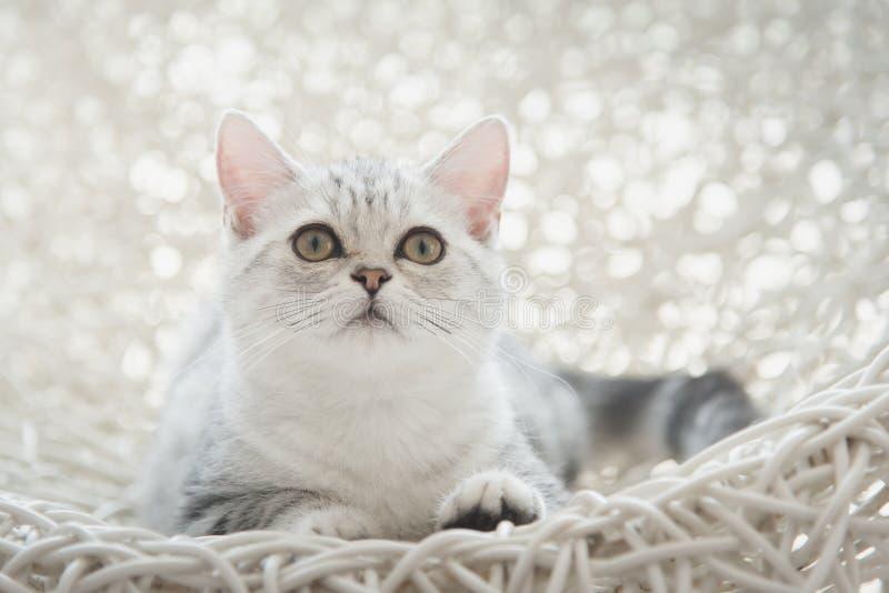 Kattunge som ligger och ser på den vita korgen arkivbilder