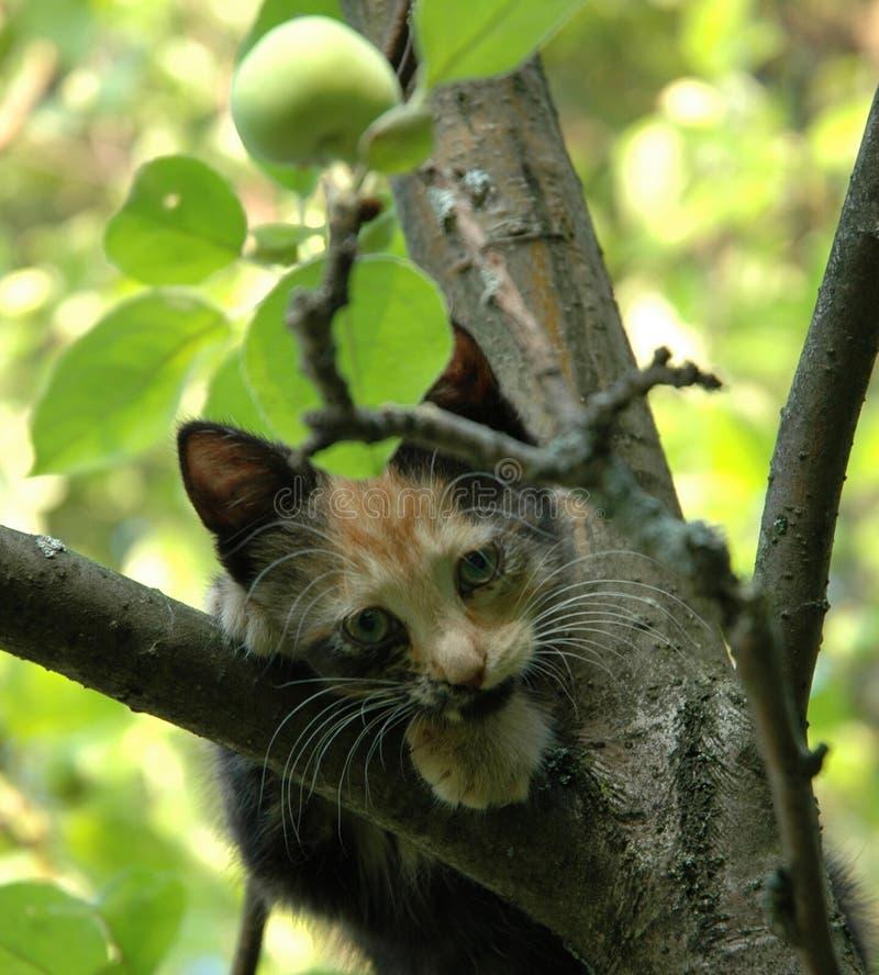 kattunge som ser skewbald arkivfoton