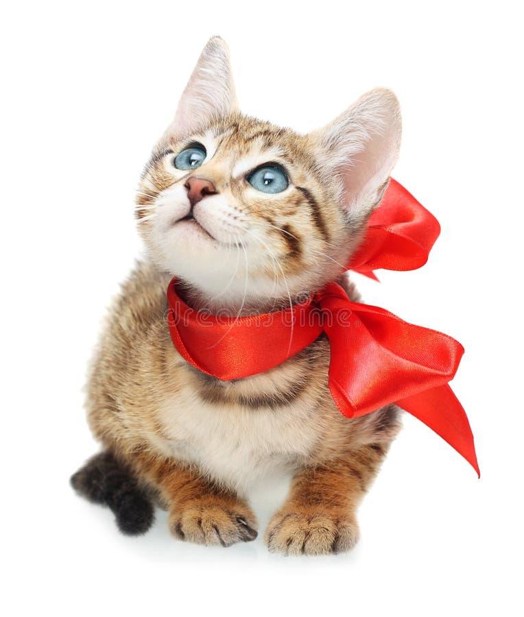 Kattunge som ser upp med den röda pilbågen arkivbilder