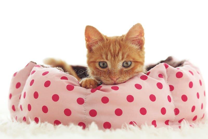 Kattunge som sover i sängen royaltyfria bilder