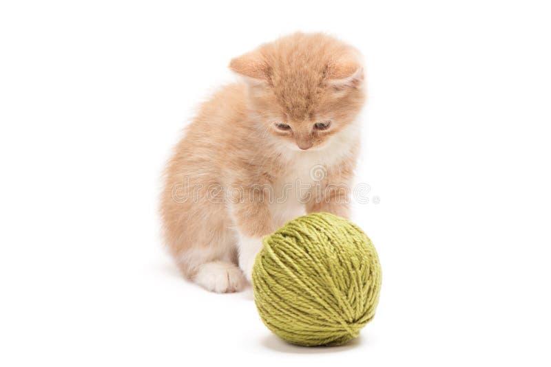 Kattunge som spelar med den gröna clewen fotografering för bildbyråer
