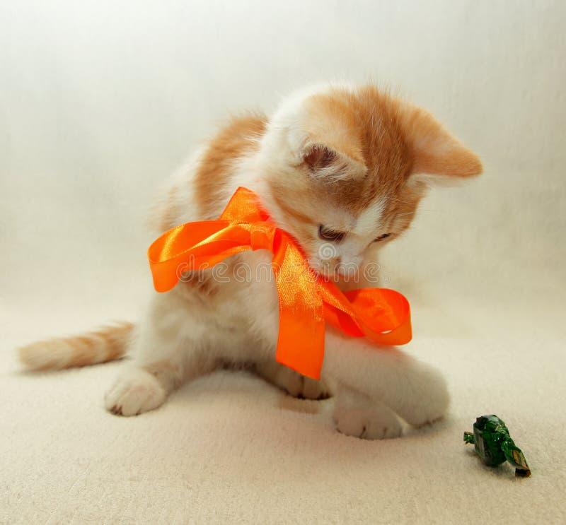 Kattunge som spelar med en pilbåge med godisen royaltyfri foto