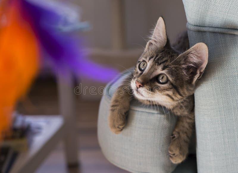 Kattunge som spelar med kulöra fjädrar arkivfoton
