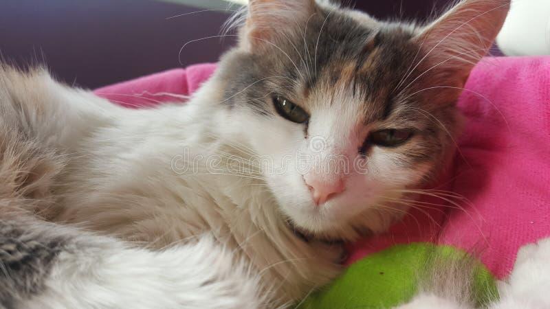 Kattunge som vaknar upp i eftermiddagen fotografering för bildbyråer