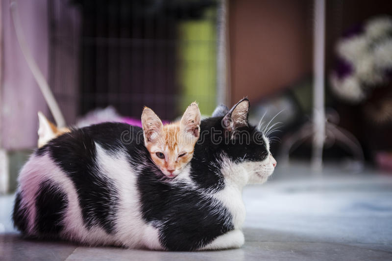 Kattunge som vilar på mum royaltyfria foton