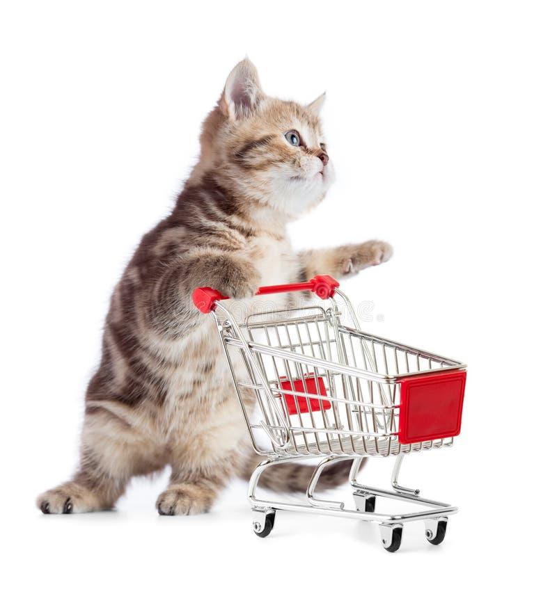 Kattungekatt med den isolerade shoppingvagnen royaltyfri fotografi