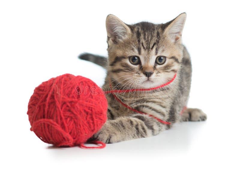 Kattungekatt som spelar den isolerade clewbollen fotografering för bildbyråer