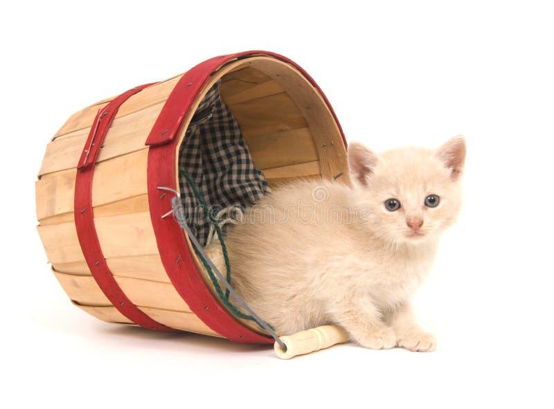 kattungemischief arkivbild