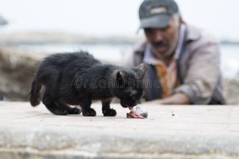 Kattungen äter fisken, Essaouira Marocko royaltyfria foton