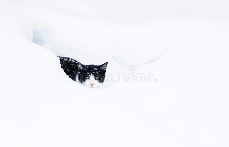 kattungen huka sig ned i en vit snödriva i wintergardensnöfalltiden royaltyfri bild