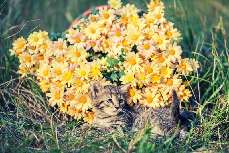 Kattungen ligger på den gröna gräsmattan royaltyfri bild