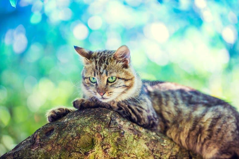 Kattungen ligger på trädet fotografering för bildbyråer