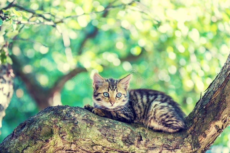 Kattungen ligger på trädet royaltyfria bilder