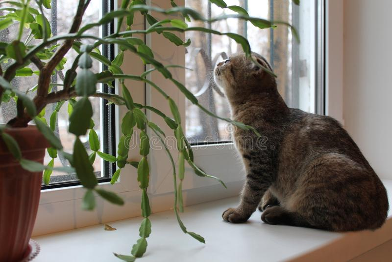 Kattungen sitter på fönsterfönsterbrädan arkivfoto