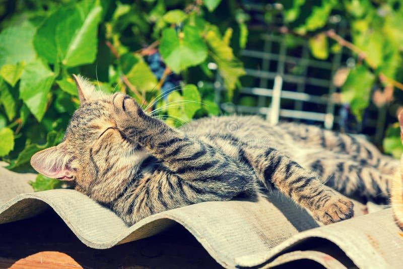 Kattungen tvättar sig upp med dess tafsar royaltyfria bilder