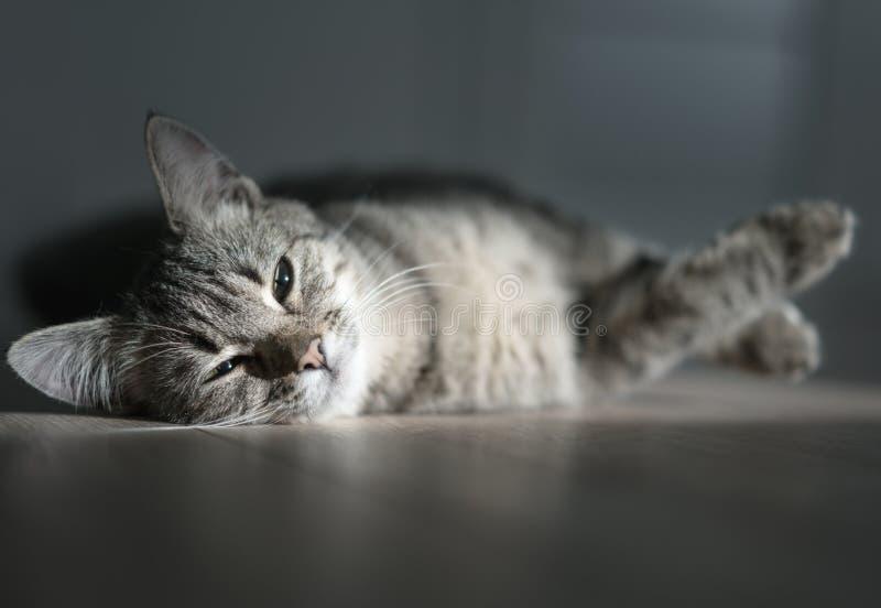 Kattungen vilar i soligt rum fotografering för bildbyråer