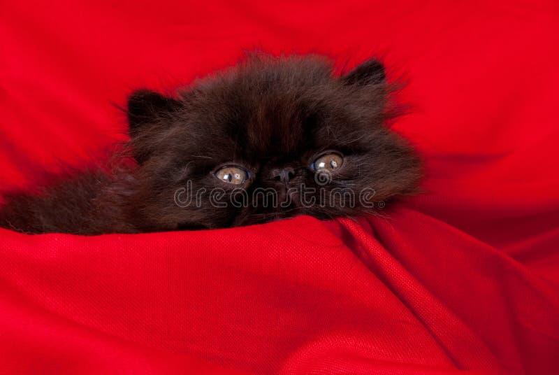 kattungeperser royaltyfria bilder