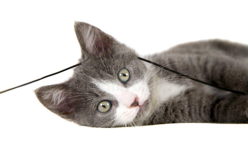 kattungeplayfull arkivfoton