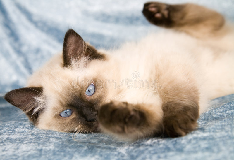 kattungeplayfull arkivbild