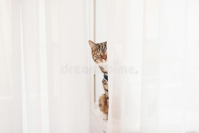 Download Kattungesammanträde På En Fönsterbräda Fotografering för Bildbyråer - Bild av intresserat, randigt: 78729115