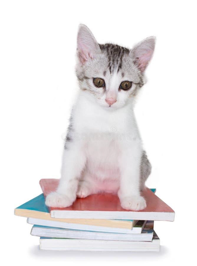 Kattungesammanträde på högen av böcker arkivfoto
