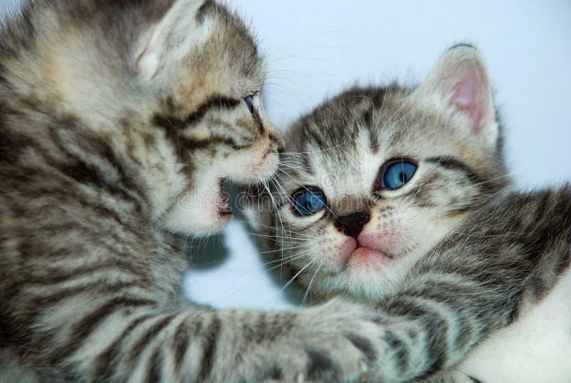 kattungesamtal arkivbilder