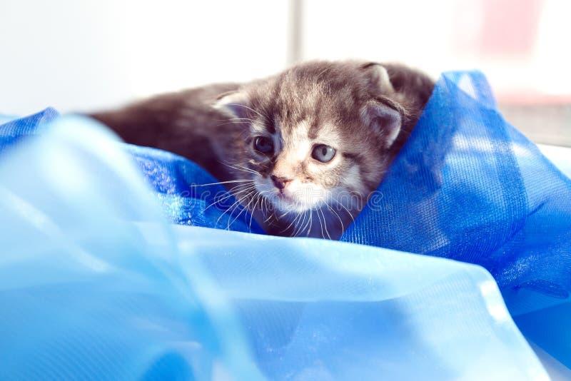 Kattungesilkespappret ligger på solen royaltyfri bild