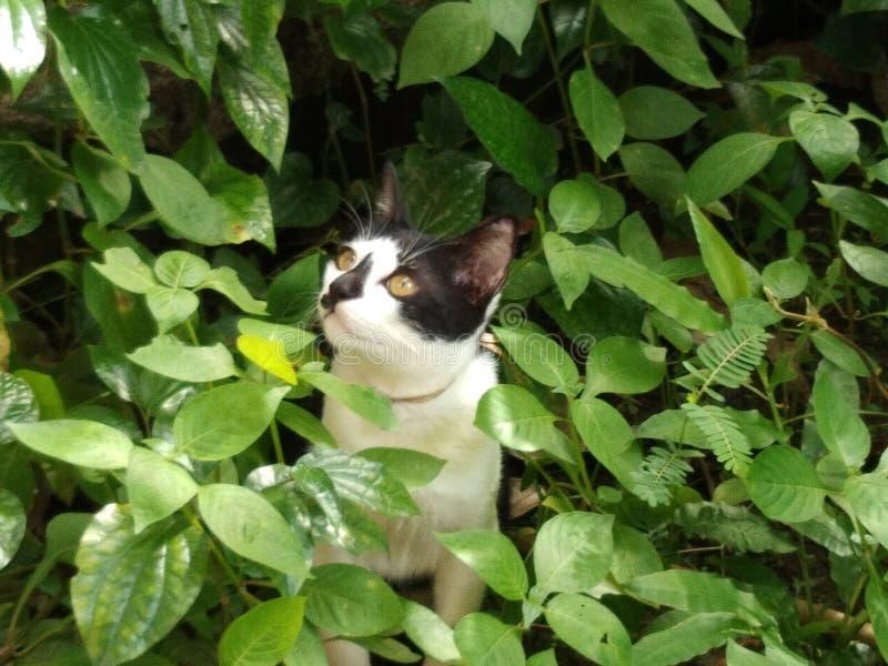 Kattungeställning runt om växter arkivbilder