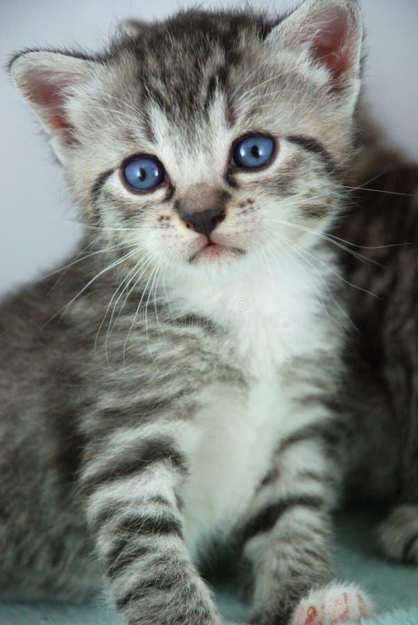 kattungestående arkivbild