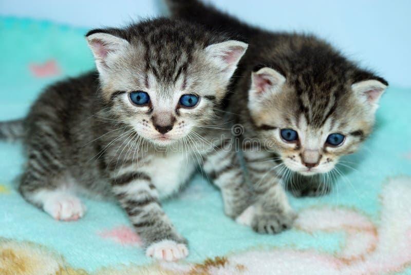 kattungetabby mycket lilla två arkivfoto