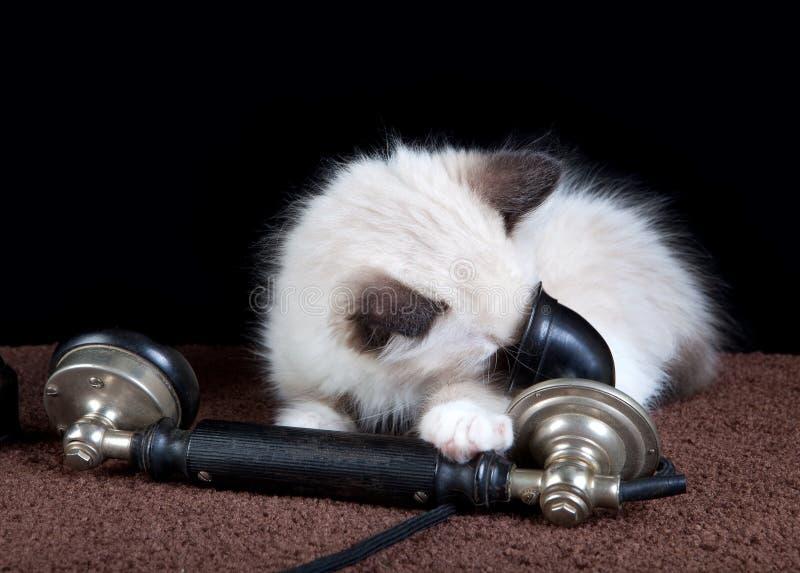 kattungetelefon arkivfoton