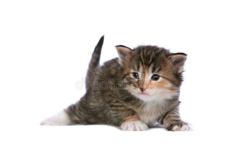 kattungetortie royaltyfria foton
