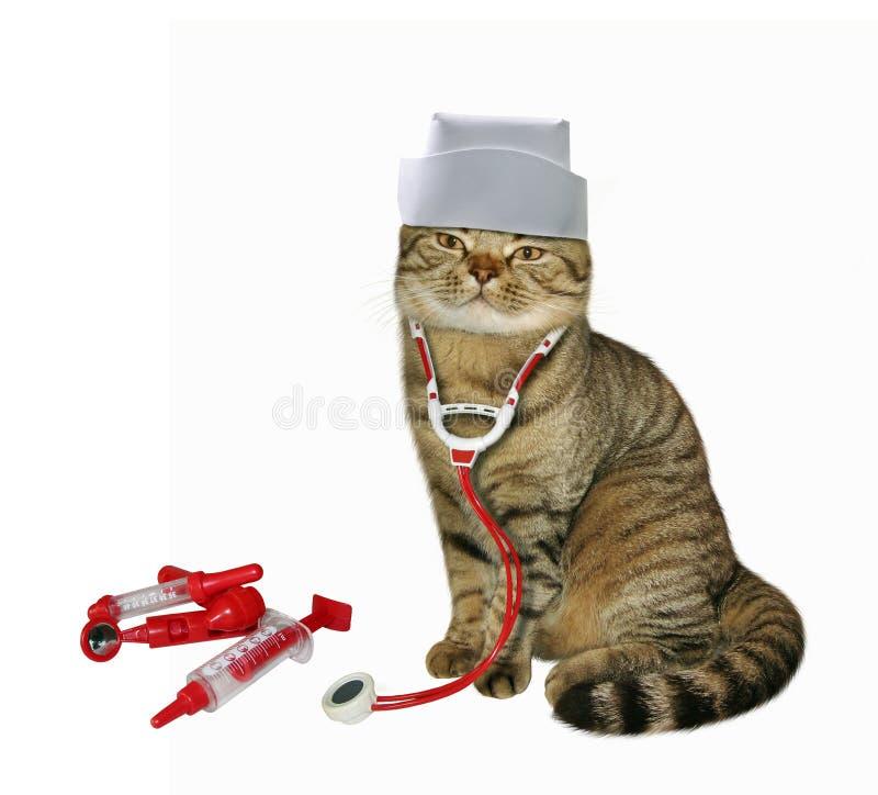 Kattveterinären fotografering för bildbyråer