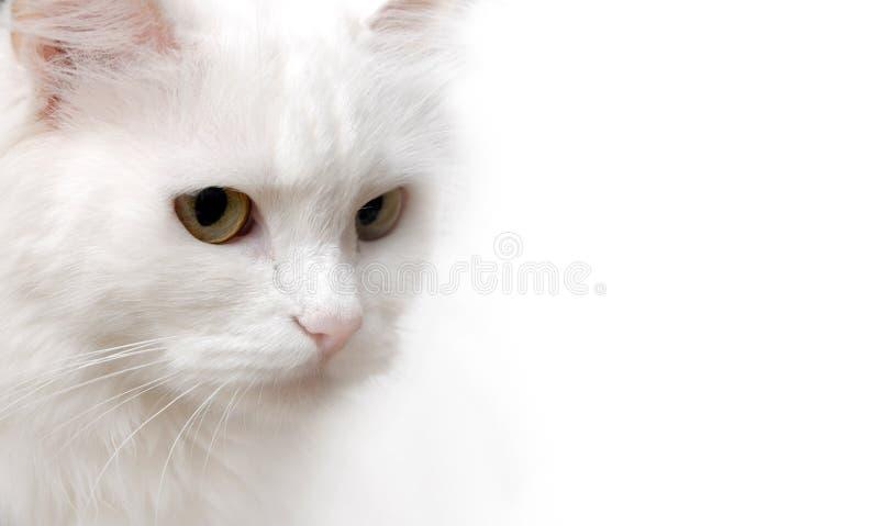 kattwhite