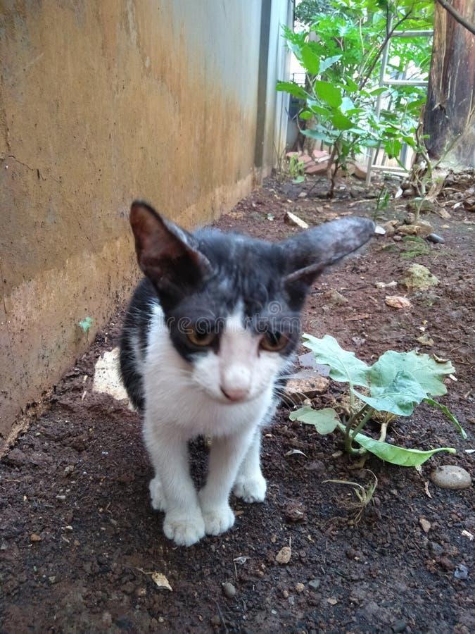 Katty image libre de droits
