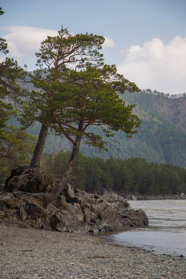Katun river coast in Altai mountains. Chemal, Altay Republic, Siberia, Russia stock photography