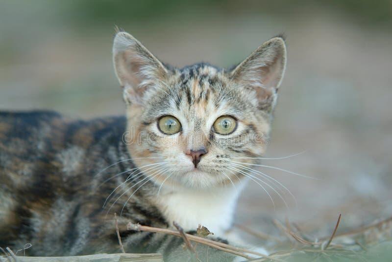 Katze 1 stockbilder