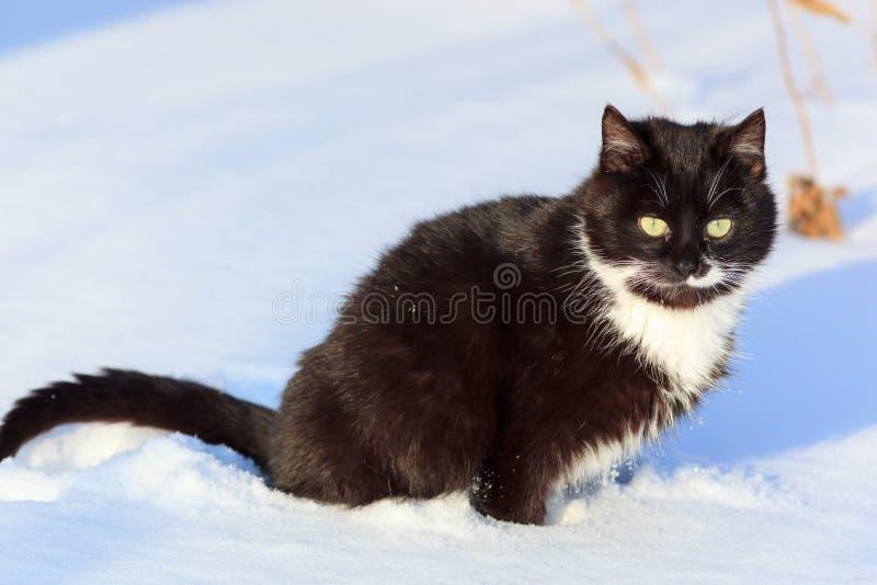 Katze. stockbilder